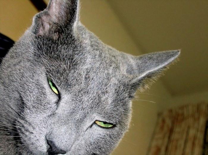 cat1-000.jpg