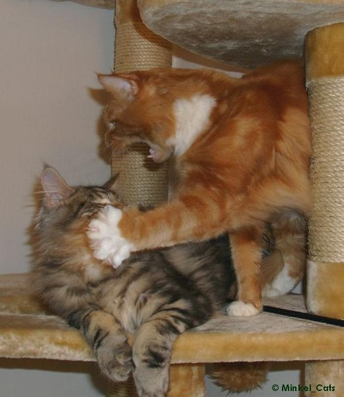 cat1-001.jpg