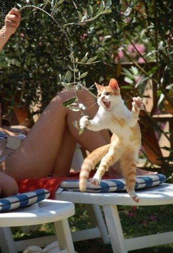 cat1-002.jpg