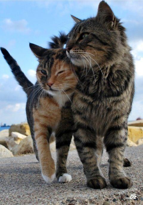 cat1-003.jpg