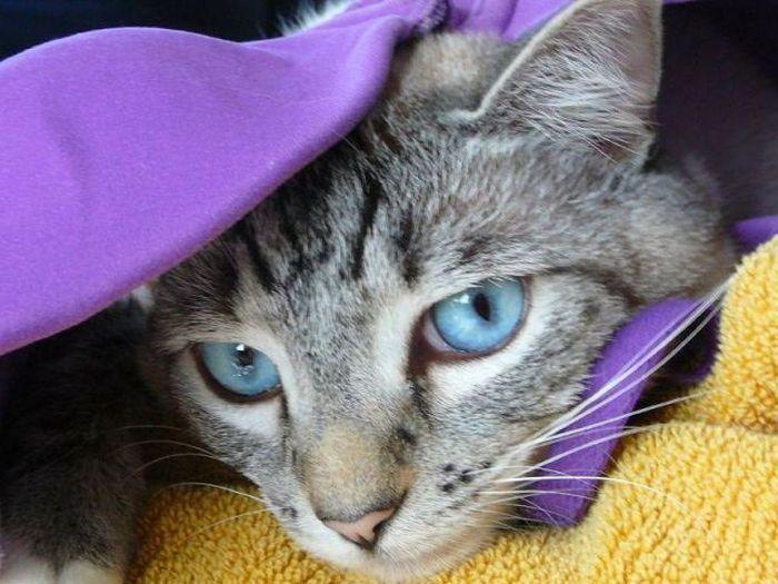 cat1-006.jpg