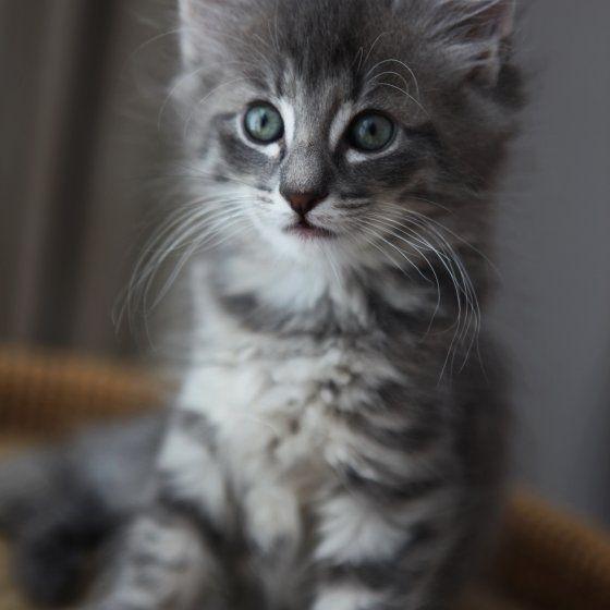 cat1-007.jpg