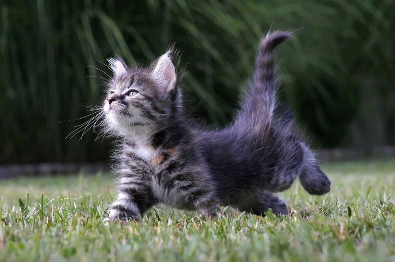 cat1-008.jpg