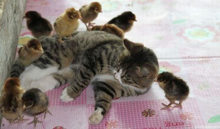 cat1-010.jpg