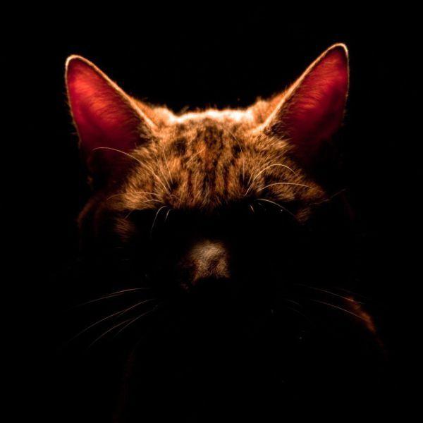 picture-cat01-035.jpg