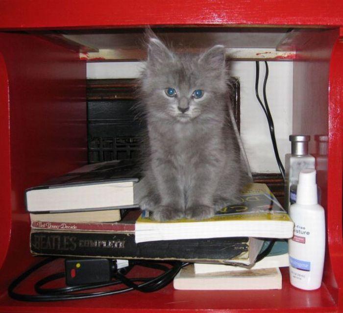 picture-cat01-036.jpg