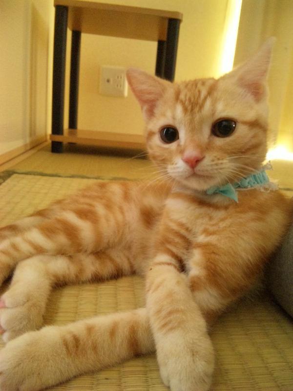 picture-cat01-038.jpg