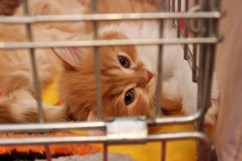 picture-cat01-039.jpg