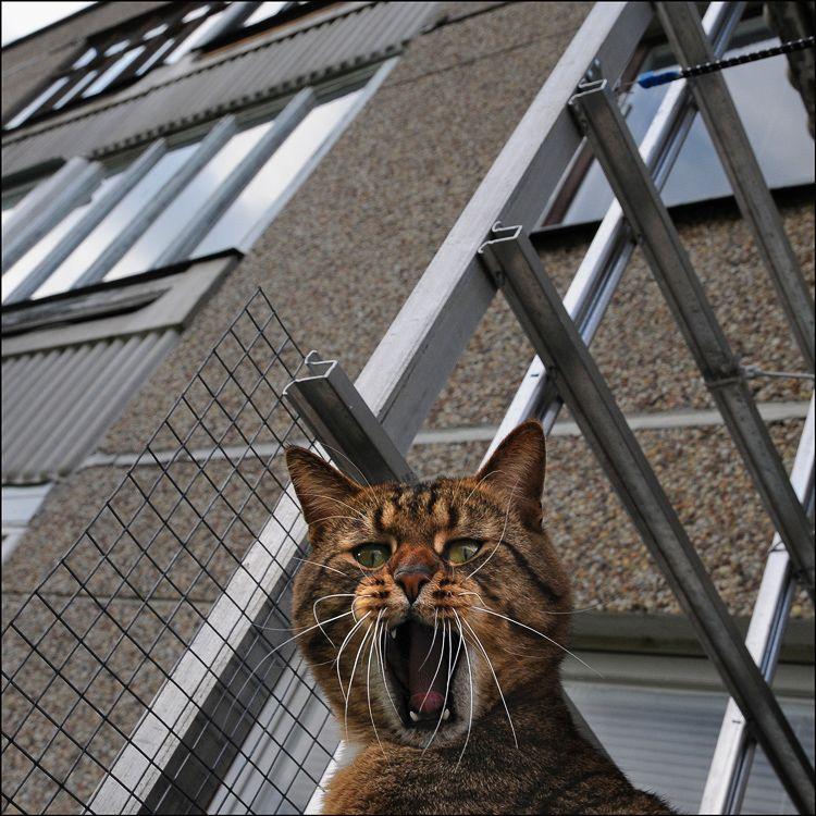 picture-cat01-040.jpg