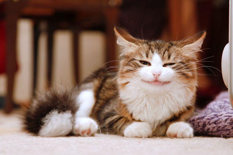 picture-cat01-021.jpg