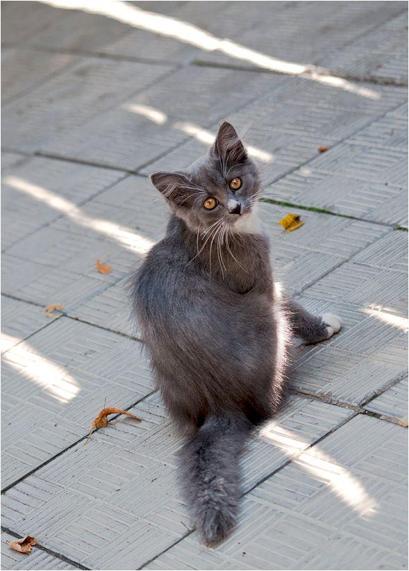 picture-cat01-022.jpg