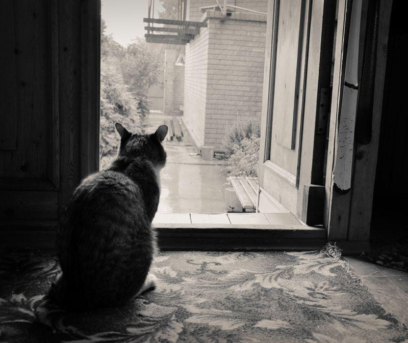 picture-cat01-025.jpg
