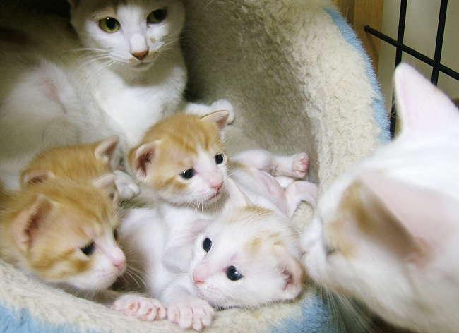 picture-cat01-026.jpg