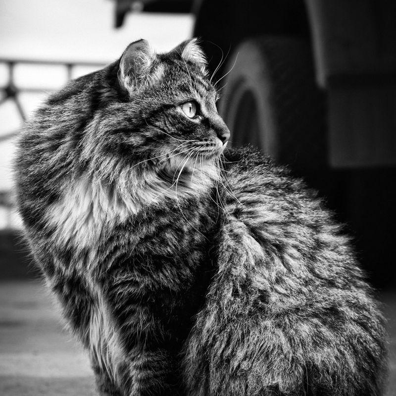 picture-cat01-027.jpg