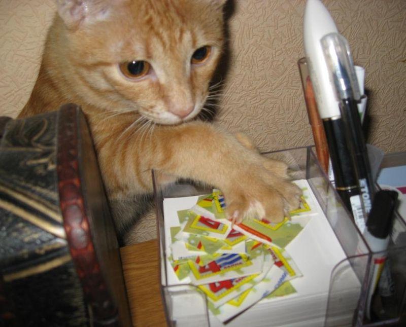 picture-cat01-028.jpg
