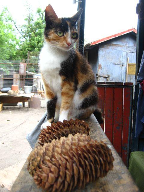 picture-cat01-029.jpg