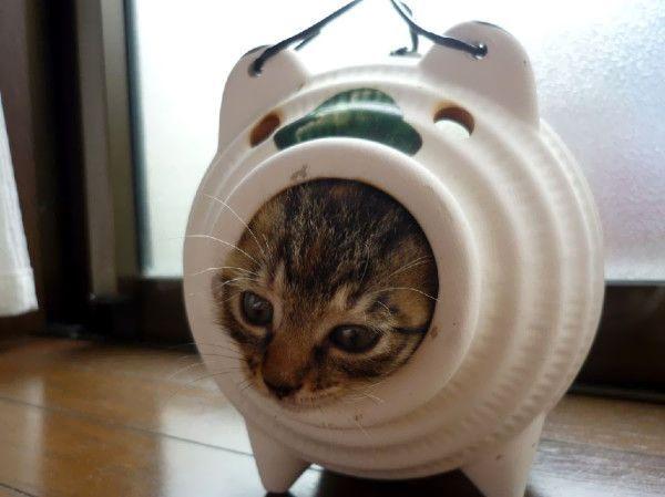 picture-cat01-044.jpg