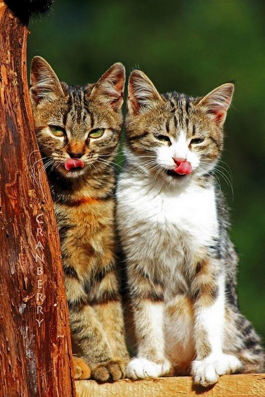 picture-cat01-045.jpg