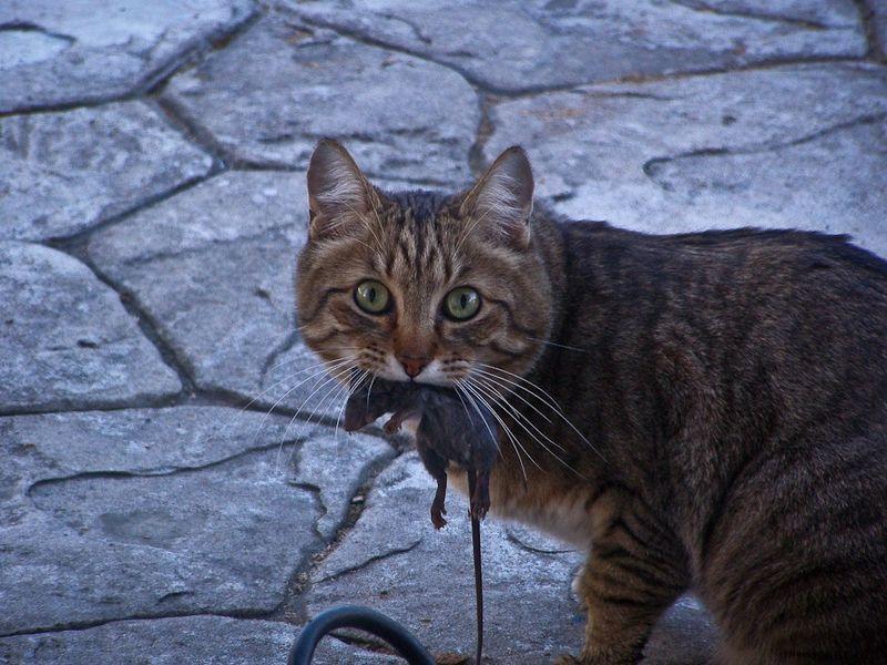 picture-cat01-047.jpg
