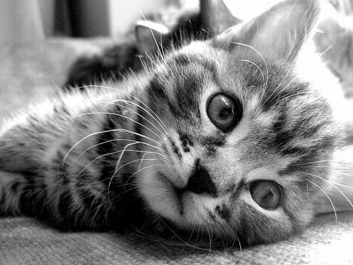 picture-cat01-048.jpg