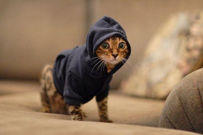 picture-cat01-049.jpg
