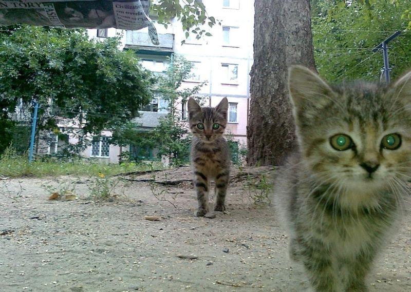 picture-cat01-050.jpg