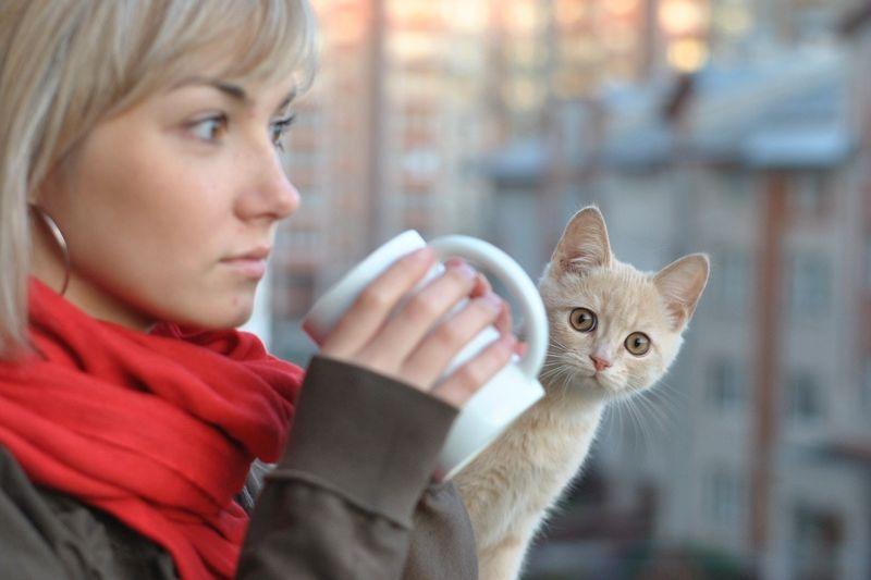 picture-cat01-052.jpg