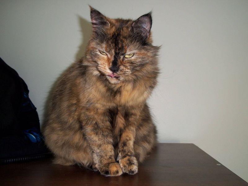 picture-cat01-053.jpg