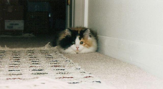 picture-cat01-058.jpg