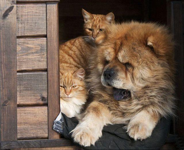 picture-cat01-059.jpg