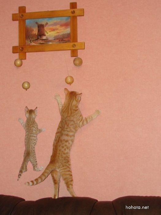 picture-cat02-051.jpg