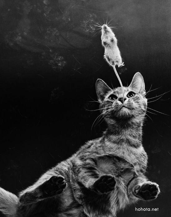 picture-cat02-053.jpg