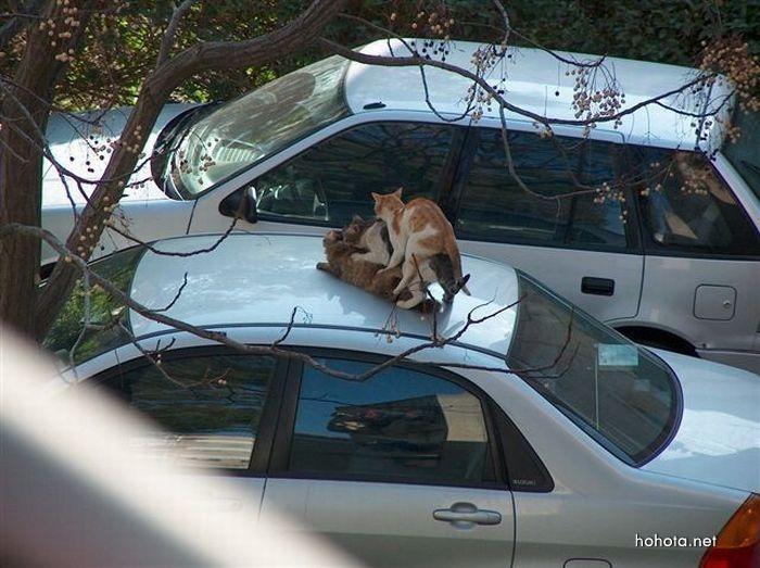 picture-cat02-054.jpg