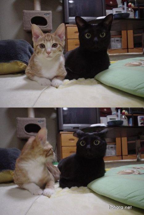 picture-cat02-055.jpg