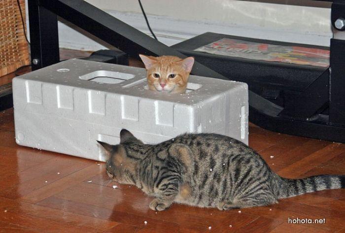 picture-cat02-056.jpg