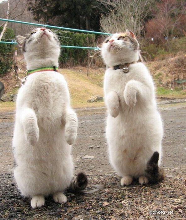 picture-cat02-058.jpg