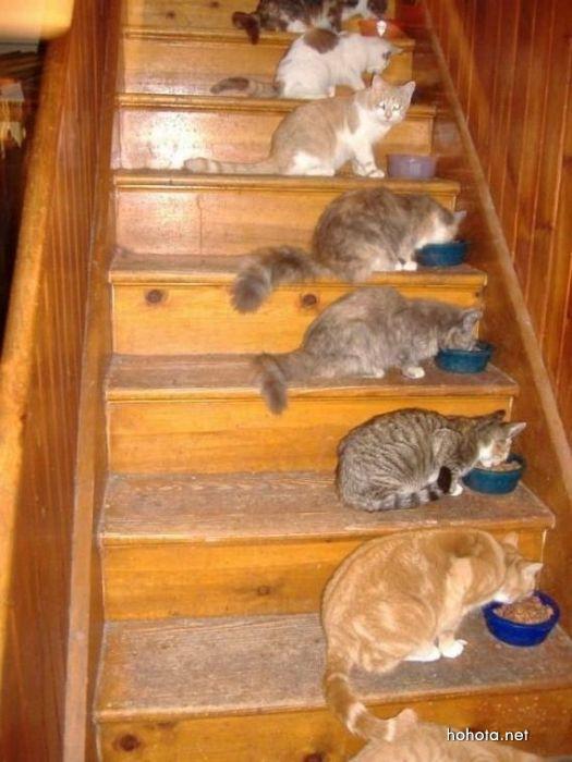 picture-cat02-059.jpg