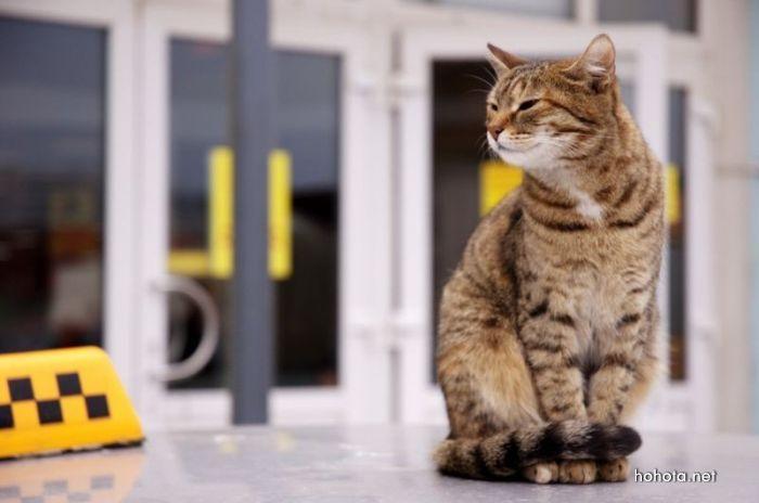 picture-cat02-060.jpg