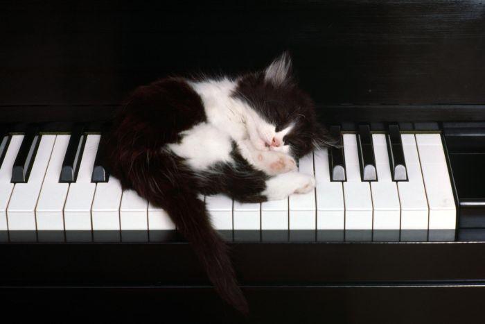 picture-cat01-061.jpg