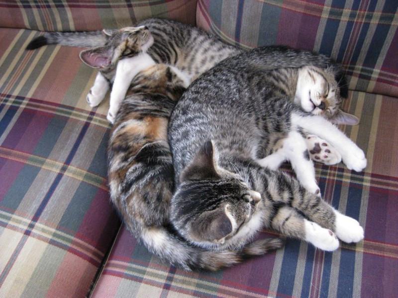 picture-cat01-066.jpg