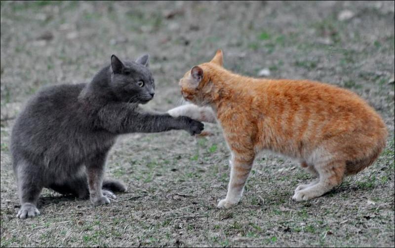 picture-cat01-067.jpg