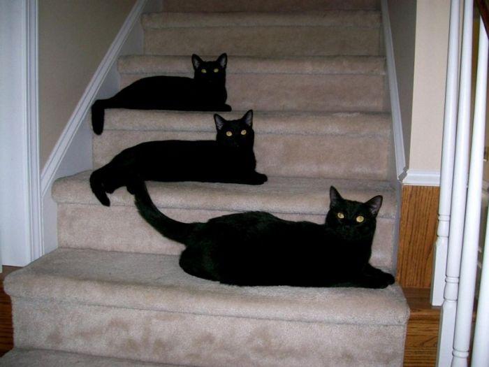 picture-cat01-070.jpg