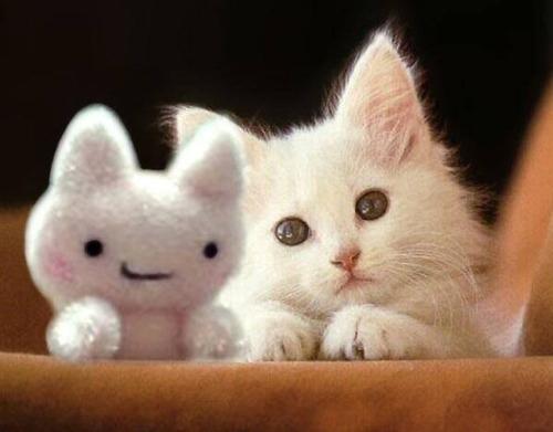 picture-cat01-071.jpg