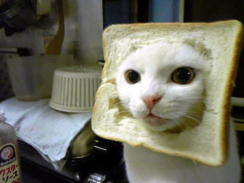 picture-cat01-072.jpg