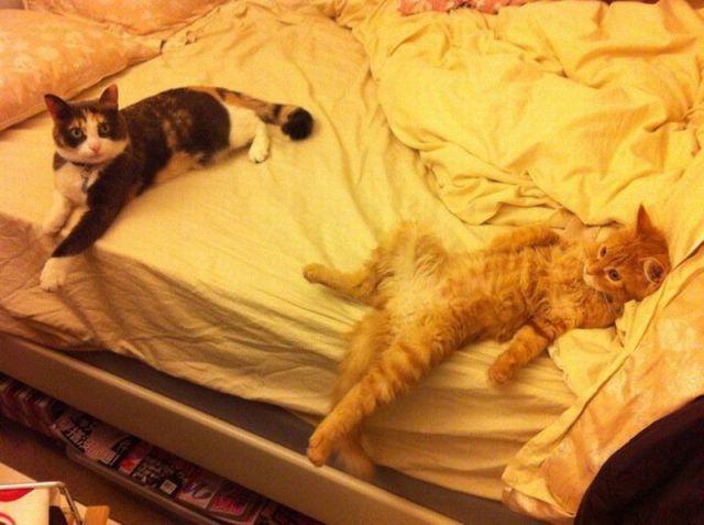 picture-cat01-074.jpg