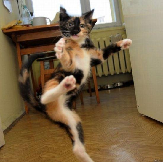 picture-cat01-075.jpg