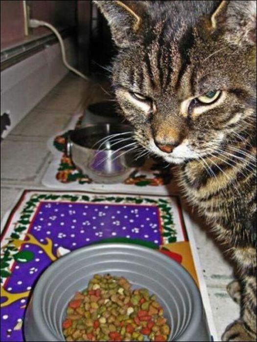 picture-cat01-076.jpg