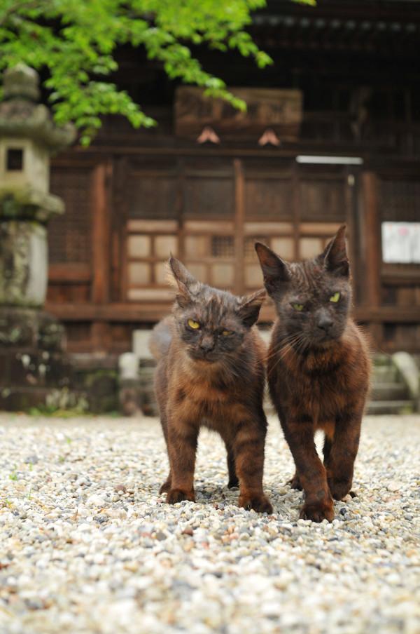 picture-cat01-082.jpg