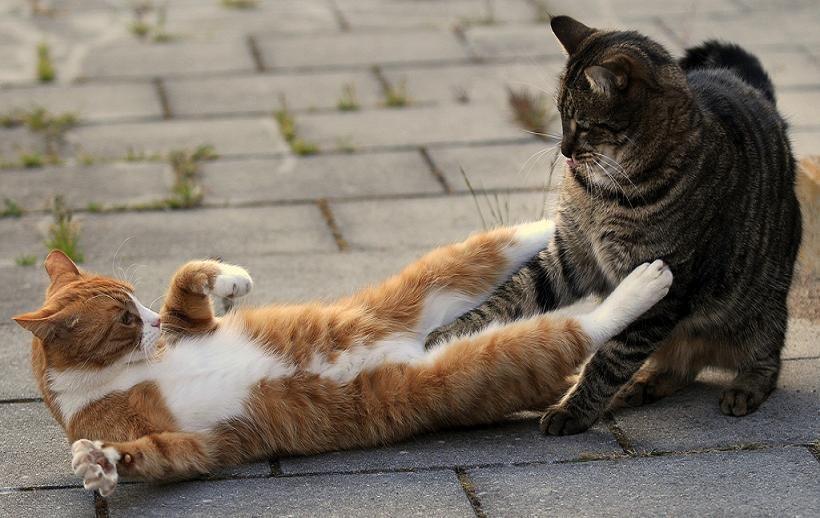 picture-cat01-083.jpg