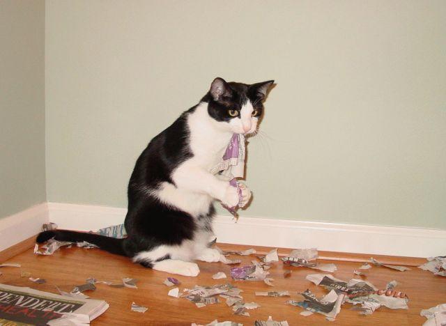 picture-cat01-084.jpg